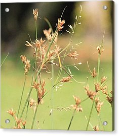 Garden Grass From A Different Angle, By Acrylic Print