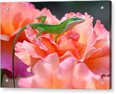 Acrylic Print featuring the photograph Garden by Kathy Gibbons