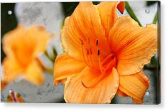 Acrylic Print featuring the photograph Garden Lily by Davandra Cribbie