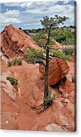 Garden Of The Gods  - The Name Says It All Acrylic Print by Christine Till