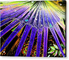 Garden Palm At Night Acrylic Print
