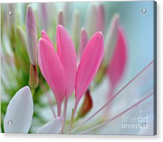 Garden Pastels Acrylic Print by Elaine Manley