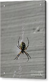 Acrylic Print featuring the photograph Garden Spider by Tannis  Baldwin