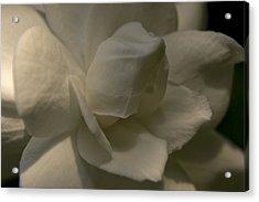 Gardenia Acrylic Print