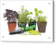Gardening Tools And Plants Acrylic Print by Elena Elisseeva