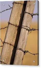 Gate Posts Join A Barbed Wire Fence Acrylic Print by Gordon Wiltsie