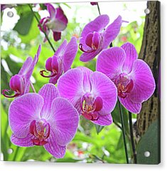 Gathering Of Orchids Acrylic Print by Becky Lodes