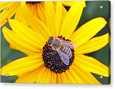 Gathering Pollen On A Sunny Day Acrylic Print by Becky Lodes