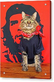 Acrylic Print featuring the photograph Gato Guevara by Joann Biondi