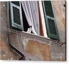 Gatto Acrylic Print by Leslie Hunziker