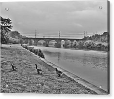 Geese Along The Schuylkill River Acrylic Print by Bill Cannon