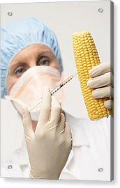 Genetically Engineered Sweetcorn Acrylic Print by Mark Sykes