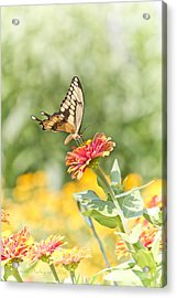 Gentle Landing Acrylic Print by Straublund Photography