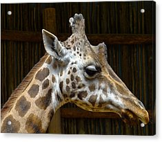 Acrylic Print featuring the photograph Gentle Man by Julia Wilcox