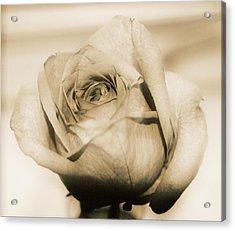 Gentle One Acrylic Print by Gloria Warren