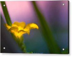 Gentle Presence Acrylic Print