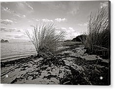 Gentle River Tide Acrylic Print