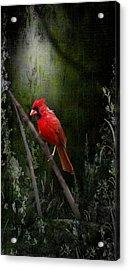 Georgia Cardinal Fine Art- Artist Cris Hayes Acrylic Print by Cris Hayes
