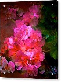 Geranium 9 Acrylic Print by Pamela Cooper