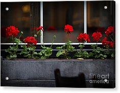 Geranium Flower Box Acrylic Print by Doug Sturgess