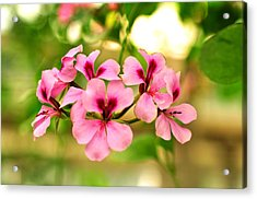 Acrylic Print featuring the photograph Geranium  by Puzzles Shum