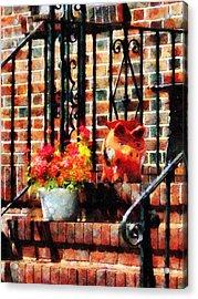 Geraniums And A Pig Acrylic Print by Susan Savad