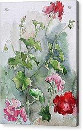 Geraniums Acrylic Print by Stephanie Aarons