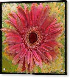 Gerber Photoart Acrylic Print