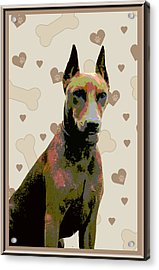 German Pinscher Acrylic Print by One Rude Dawg Orcutt