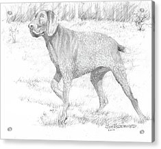 Acrylic Print featuring the drawing German Shorthaired Pointer by Jim Hubbard