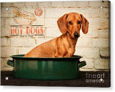 Get Your Hot Dogs Acrylic Print by Susan Candelario