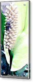 Get Your Own Flower Acrylic Print by Danielle  Parent