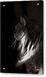 Ghiga In The Dark Acrylic Print