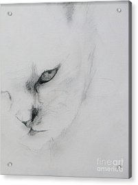 Ghost Cat Acrylic Print