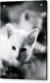 Ghost Kitties Acrylic Print