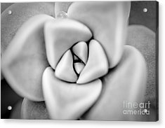 Ghost Petals Acrylic Print by Pixel Perfect by Michael Moore