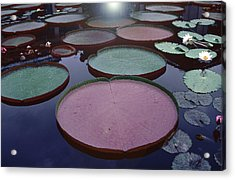 Giant Amazon Lily Pads Acrylic Print