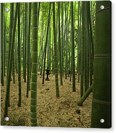 Giant Bamboo Forest With Stone Lantern, Japan Acrylic Print