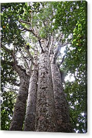Acrylic Print featuring the photograph Giant Kauri Grove by Peter Mooyman