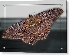 Acrylic Print featuring the photograph Giant Moth by DigiArt Diaries by Vicky B Fuller