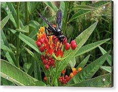 Giant Wasp Acrylic Print