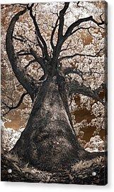 Giant White Oak Acrylic Print