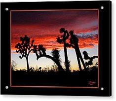 Giants Of Joshua Tree Ca Acrylic Print