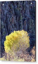 Gilded Autumn Acrylic Print