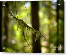 Gilded Branch Acrylic Print by Mike Reid