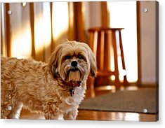 Ginger Acrylic Print by JM Photography