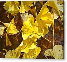 Gingko Dew Acrylic Print