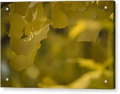 Ginko 3 Acrylic Print
