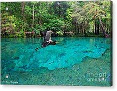 Ginnie Springs Acrylic Print