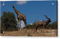 Giraffe And Kudu Acrylic Print by Mareko Marciniak
